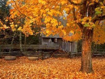 Beautiful Autumn   Wallpaper 16145