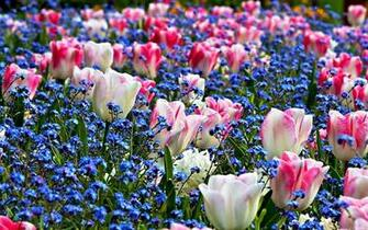Spring Flowers Backgrounds HD