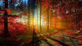 Nature Hd Wallpapers Download 15862 Wallpaper Wallpaper hd