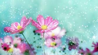 Flower Wallpapers Best Wallpapers