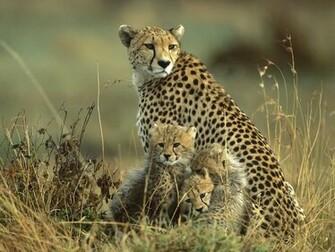 Top 15 Most Beautiful Wildlife Wallpapers