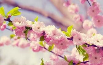 wallpapers Pink Cute Flowers
