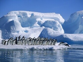 Antarctica wallpaper Antarctica hd wallpaper background desktop