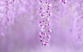 Cute Purple Wallpapers