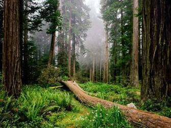 Desktop Wallpaper Redwood National Park h441152 Nature HD Images