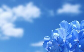 18491 desktop wallpapers blue flowersjpg