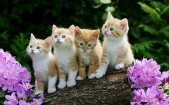 Cute Kitten Desktop Wallpaper wallpaper   1011411