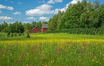 Wallpaper trees flowers home meadow New Hampshire New