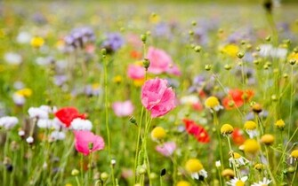 Summer Meadow Colorful Flowers Wallpapers   2560x1600   886374