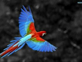 Most Beautiful Parrot Pictures HD Wallpapers Pictures Images