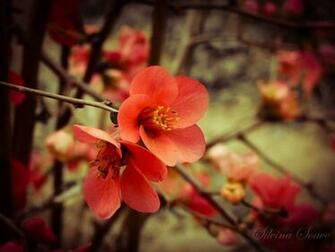 Download Cute Red Flower Wallpaper