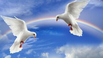 wallpapers natural beauty white pigeon fr wallpaper natural beauty