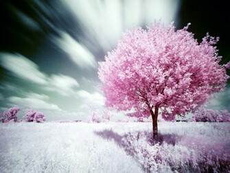 Nature Pink Wallpaper Yvt 1024x768 pixel Nature HD Wallpaper 25523