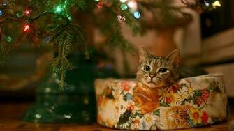 Cat under Christmas tree Widescreen Wallpaper   2403