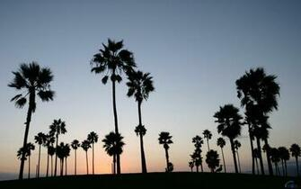 download Download Wallpaper Sunset at Venice Beach LA