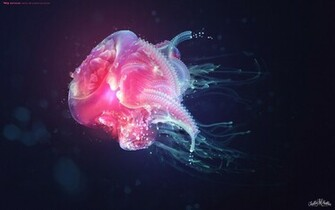 Jellyfish Wallpapers HD Wallpapers