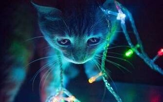 Cat In The Christmas Tree   Cats Wallpaper 41243077