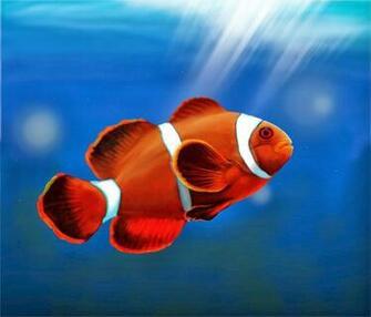 Desktop HD Wallpapers Downloads Clown Fish HD Wallpapers