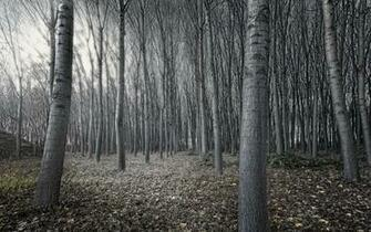 Black And White Tree Forest Wallpapers   1920x1200   1419456