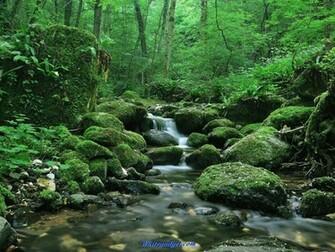 107359d1338614028 natural beauty wallpaper natural beauty imagesjpg