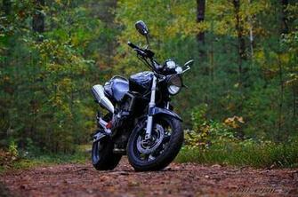 2001 Honda CB 600 Hornet Picture 2601910