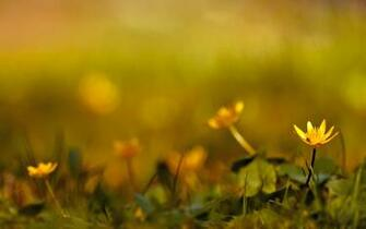 Spring Widescreen Wallpaper Hd Wallpapers