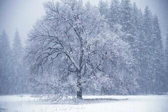 Winter tree snow storm Wallpaper 1444369814