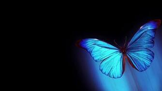 68 Butterfly Desktop Wallpapers on WallpaperPlay