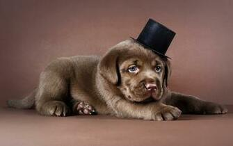 Puppies HD Wallpapers Hd Wallpapers