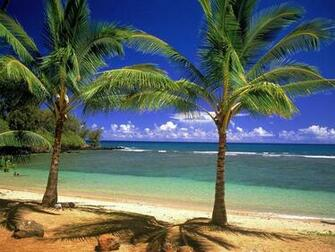 Nice beach background white sand blue water green palm