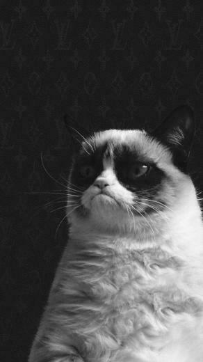 Funny Grumpy Cat HD Wallpaper iPhone 6 plus   wallpapersmobilenet