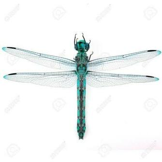 Beautiful Dragonfly On White Background Stock Photo Picture And