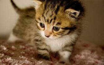 Cute Baby Animals Wallpapers 9905 Hd Wallpapers in Animals   Imagesci