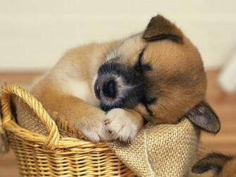 Animals Zoo Park Cute Dogs Wallpapers for Desktop Cute Puppy