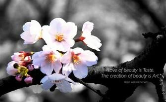 beauty prev Beauty Wallpaper widescreen wallpaper taste resolution