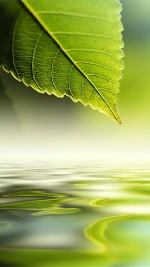 nature green wallpapers for iphone 5 640x1136 hd wallpapers for iphone