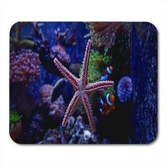 Amazoncom Semtomn Gaming Mouse Pad Underwater Colorful Seastar
