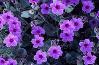 purple cute flowers wallpaper   pink and purple Wallpaper