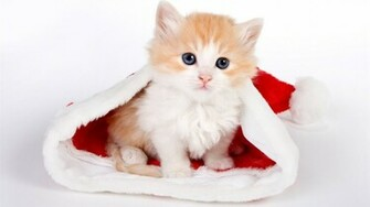 Cute Christmas Kittens 9832 Hd Wallpapers in Celebrations   Imagesci