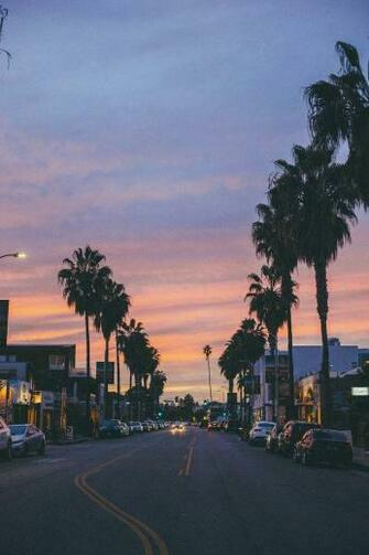 venice beach california sunset palm trees photography