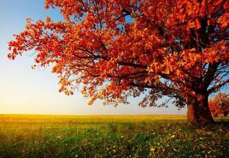 autumn trees desktop wallpaper