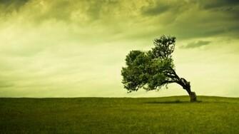 wallpaper proslut HD Tree Background Wallpapers Green Trees