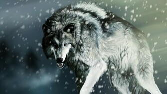 Gray Wolf Wallpaper Gray Wolf Images Cool Wallpapers