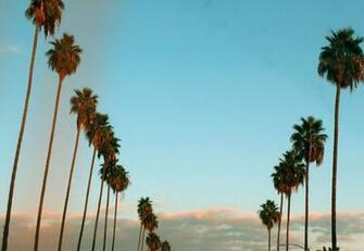 Tumblr California Desktop Wallpapers   Top Tumblr California
