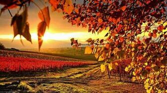 fall wallpaper HD