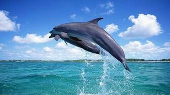 Animal Wallpapers Cute Dolphin Jumping Fish Wallpapers 7486