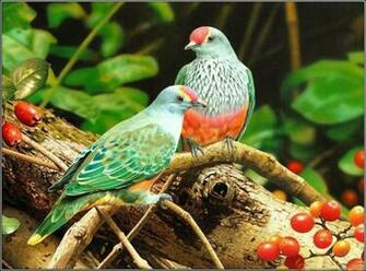 Stylish Cool Birds Photos 3d Wallpapers download