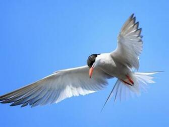 Bird in Flight   Wallpaper 44859
