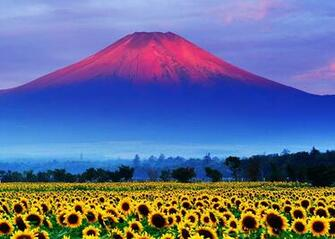 Images Mount Fuji Japan Volcano Nature Mountains Fields Flowers