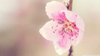 Pretty Pink Flower Wallpaper 1920x1080 Pretty Pink Flower